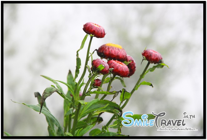 SmileTravel-Tubberg-27
