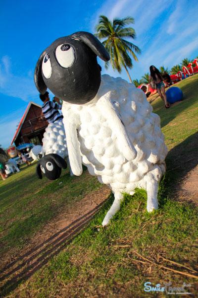 Pattaya Sheep Farm-10