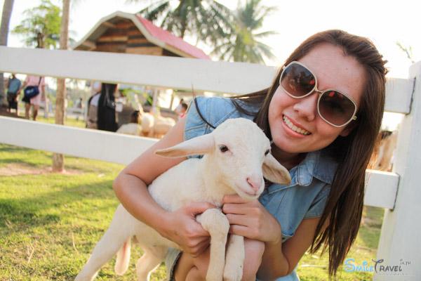 Pattaya Sheep Farm-15