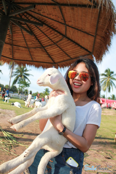 Pattaya Sheep Farm-16