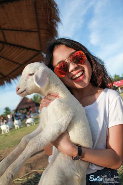 Pattaya Sheep Farm-17