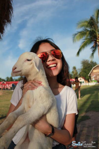 Pattaya Sheep Farm-18