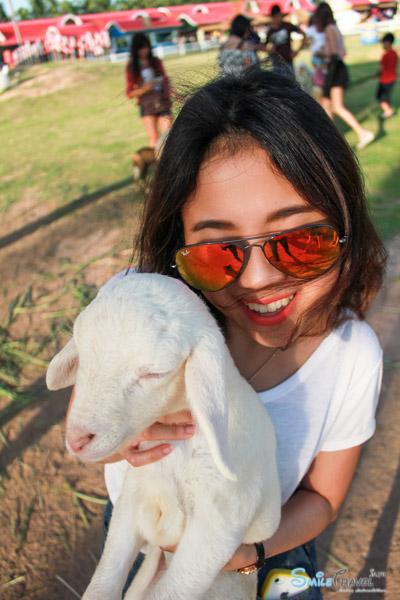 Pattaya Sheep Farm-19