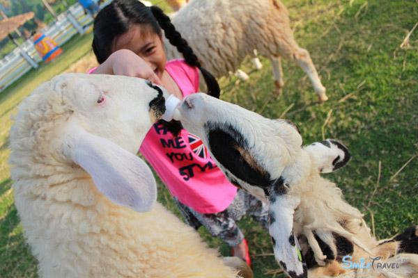 Pattaya Sheep Farm-20