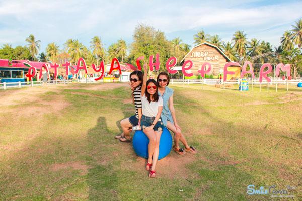 Pattaya Sheep Farm-21