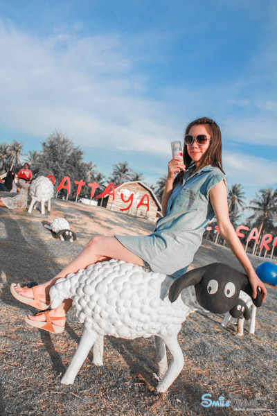 Pattaya Sheep Farm-25