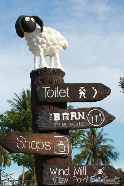 Pattaya Sheep Farm-3